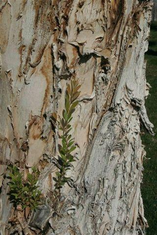 Actual Texture – THE BeZINE