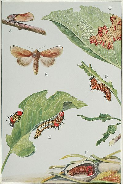 Public Domain Image ''Insects, their way and means of living'', R. E. Snodgrass used courtesy of Wikimedia Commons