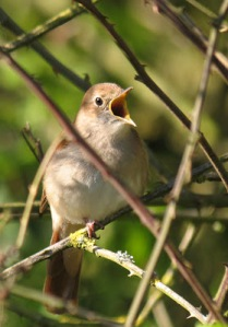 Photo Credit: John at hedgelandtales.com