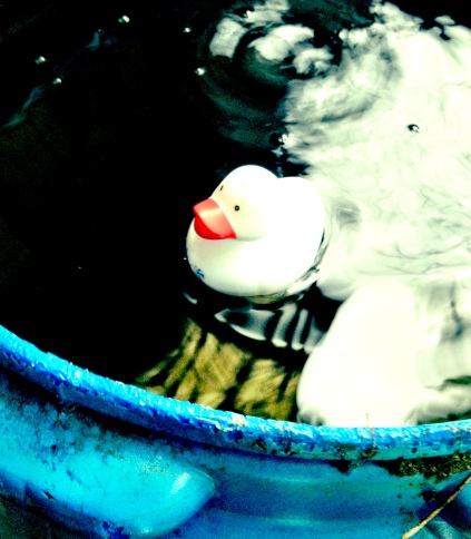 duck in my rain barrel - pic by c. schönfeld