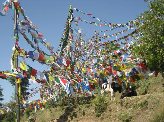 These are actually Tibetan Prayer Flags, not colored strings, and we didn't have the cow!  (Photo credit, Meredith Martin.)
