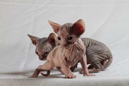 cats-629066_1920