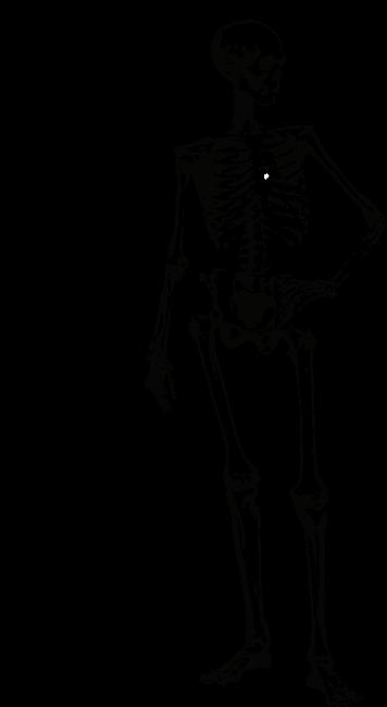 skeleton-2837849_1280