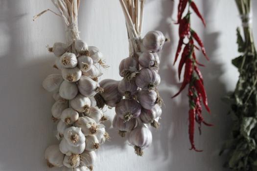 garlic-2606535_1920